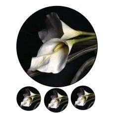 Valgomas paveikslėlis Gėlė -Kalija